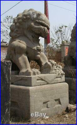 61H 6600Ibs ANCIENT PALACE LARGE ESTATE PAIR NATURE STONE FOO DOGS LION