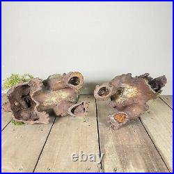 Pair Large Antique 19th Century Chinese Cast Iron Foo Dogs Temple Lions c1890